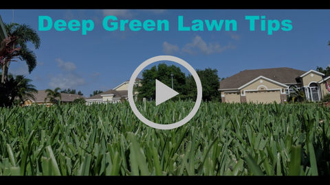 deep green lawn tips