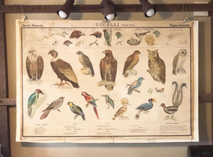 paravia wallchart wallpaper walldecor vintagechart vintage school didattica tavola animali