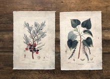 Poster botanical - set 4 pezzi ass.
