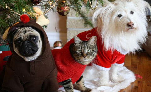 pets christmas jumpers