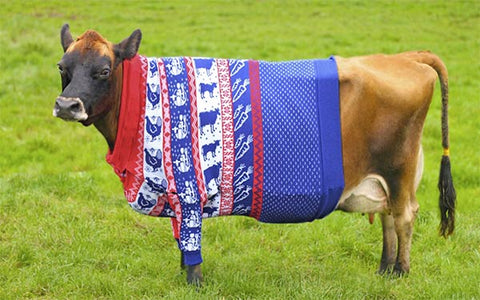 cow christmas jumper