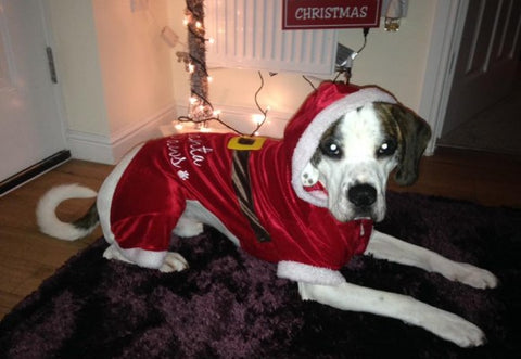 unhappy dog christmas jumper