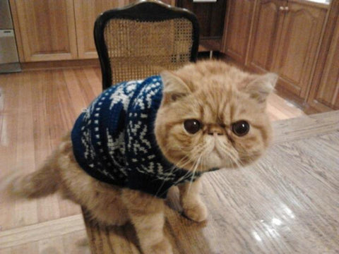 angry cat christmas jumper