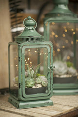 Lantern with succulent plant inside