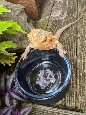 lizard drinking from crystal elixir bowl