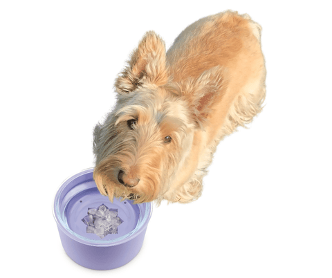 dog drinking from crystal pet water bowl