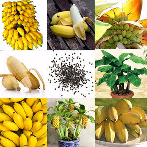 100pcs Rare Banana Bonsai Seeds Vegetable Fruit Organic Heirloom Plants For Home Garden With Bags