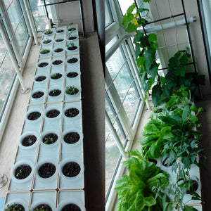 2 Sets DIY Grow Plant Hydroponic Garden