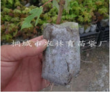 200pcs Plant-fiber Nursery Pots Seedling-raising Bags Garden Supplies Environmental Protection