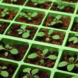 52X24cm PVC Waterproof Seedling Heat Seed Starting Germination Mat For Propagation Cloning Garden Supplies 110V/220V 18W