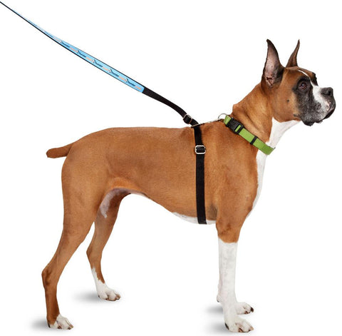 ThunderLeash No Pull Solution Dog Leash Large 19' L For Dogs 45-100 lbs. - Peazz.com