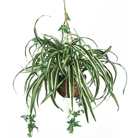 Spider Hanging Basket Silk Plant - Peazz.com