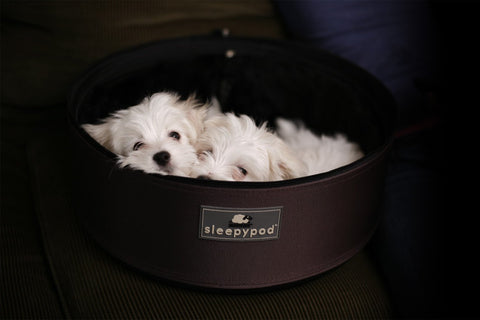 Sleepypod SP-CHO Mobile Pet Bed (Dark Chocolate) Medium - Peazz.com