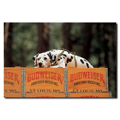 Trademark Commerce ABDAL-C1624GG Clydesdale Dalmation resting on Budweiser Case- 16x24 Canvas - Peazz.com