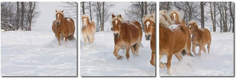 Wholesale Interiors VC-2050ABC Horse Herd Mounted Photography Print Triptych - Each - Peazz.com