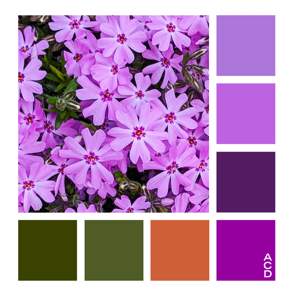Keystone State Phlox - Color Palette with HEX values