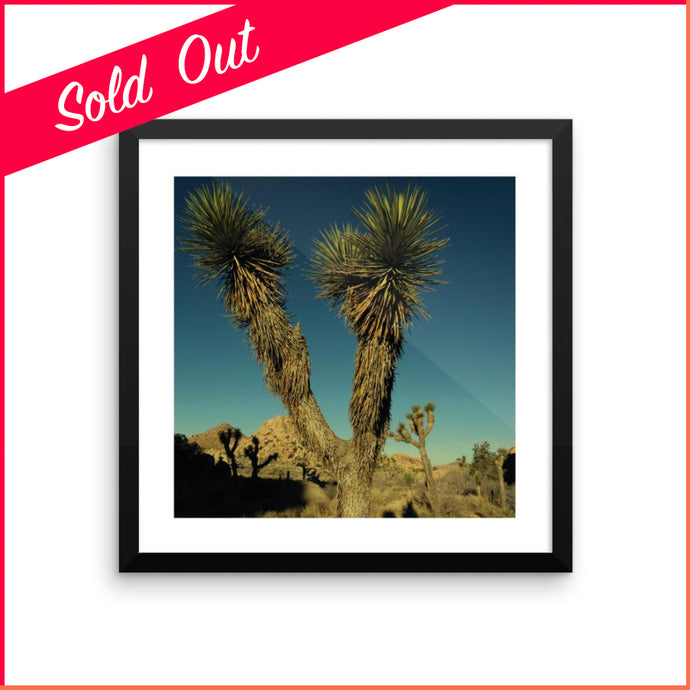 Joshua Tree to the Fault Line - Framed Print