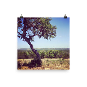 This photograph shows the gorgeous expanse of the Texas Hill Country. The central focus is a unique tree that leans to the left and overlooks gorgeous green hills. It is a museum-quality poster with vivid printing made on thick and durable matte paper.