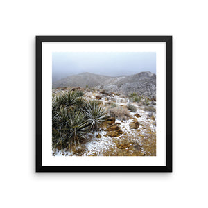 Ryan Mountain, Joshua Tree National Park. Sometimes it snows in January in the desert, and this is proof. This photo captures a misty blue fog that overlays the rocky trail lined with green hearty foliage. The fresh white snow powder is unique and makes for a special addition to any space.