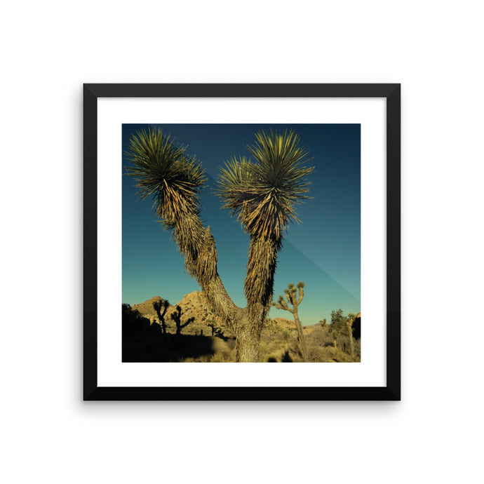 This Photograph was taken during the special morning moments at Joshua Tree National Park, Colorado. Wandering the desert can make you thirsty. Starting the hike at 5 am makes you thankful. This photo captures a green Joshua tree in open grasslands against a deep blue piercing morning sky.
