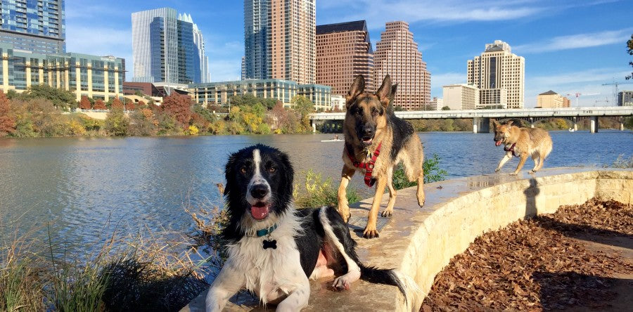 Eight Resolutions for the Austin Pet Parent