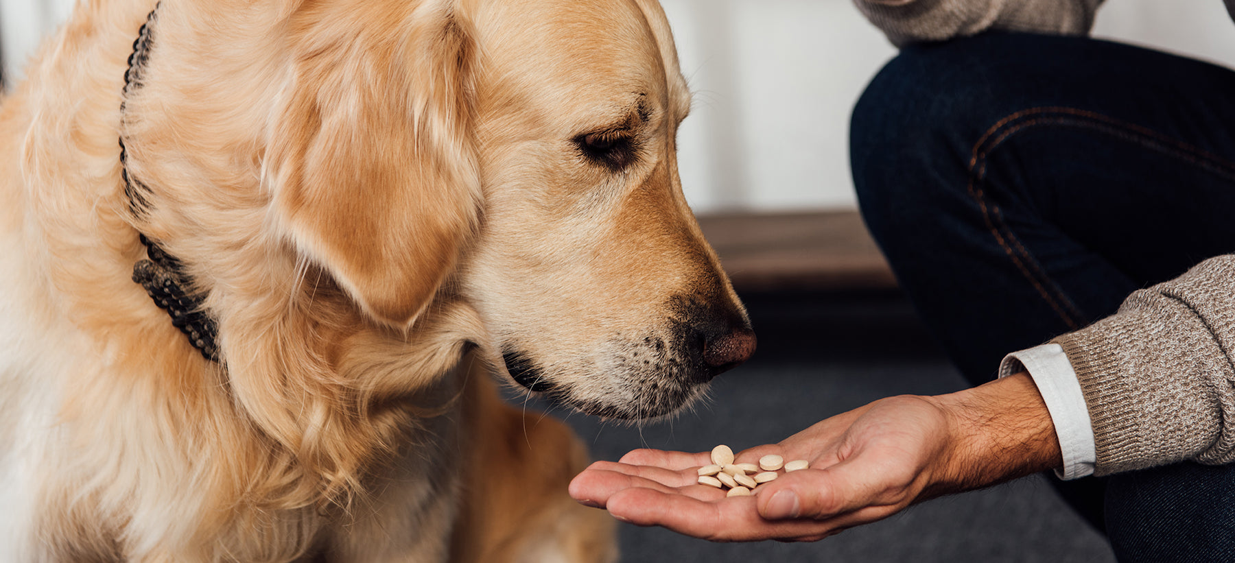 Pet Supplements: Does My Pet Need Them?