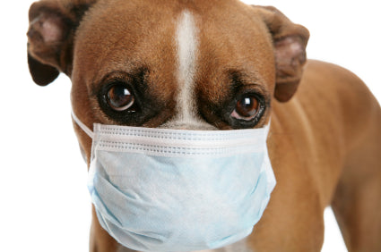 7 Facts to Know About the Dog Flu