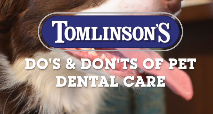 The Do's and Don'ts of Pet Dental Health