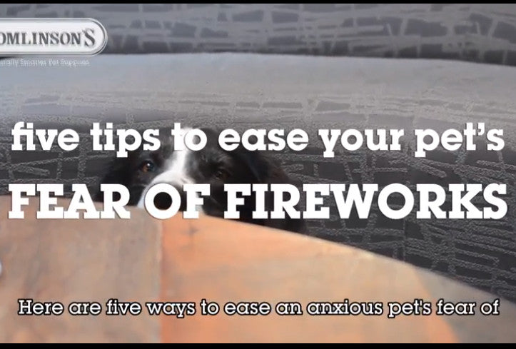 5 Tips to Ease a Pet's Fear of Fireworks