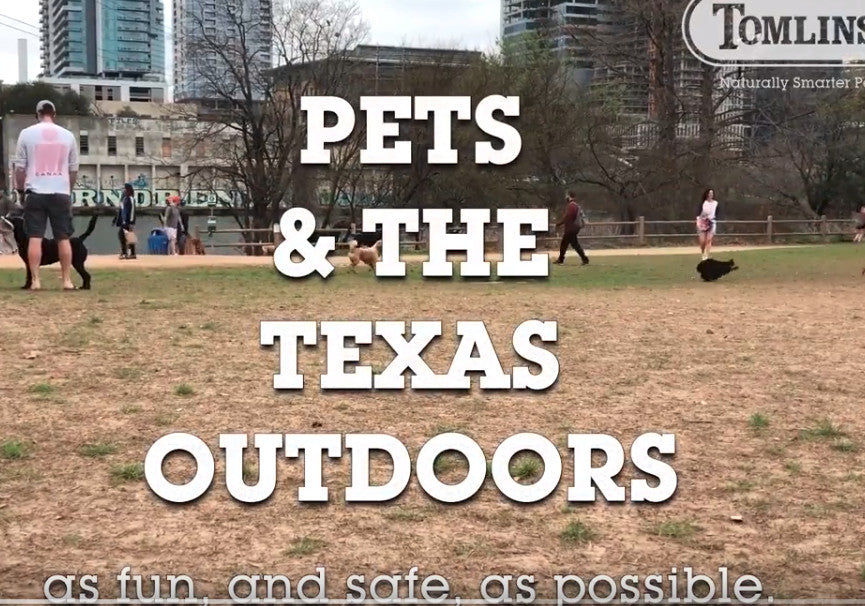 Tips + Etiquette: Off-Leash Dog Parks in Central Texas