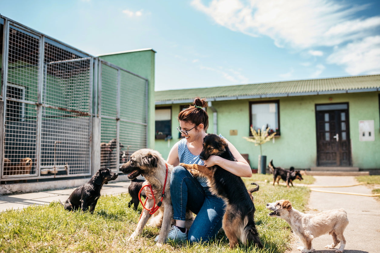 safety at dog daycare facility