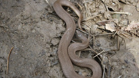 Earth Snake - Photo by Stephen Horvath | Flickr