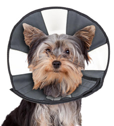 ZenPet Zen Cone For Dogs