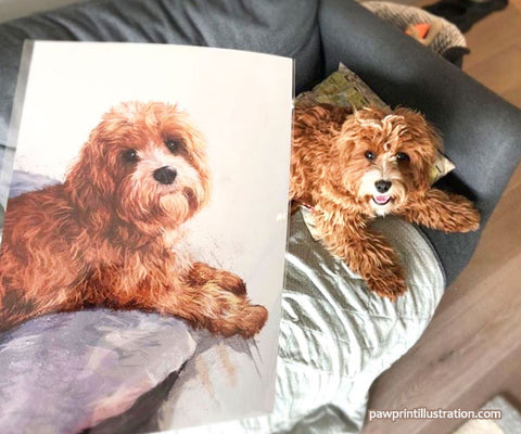 Pet portrait of Pepper Potts the cavapoo