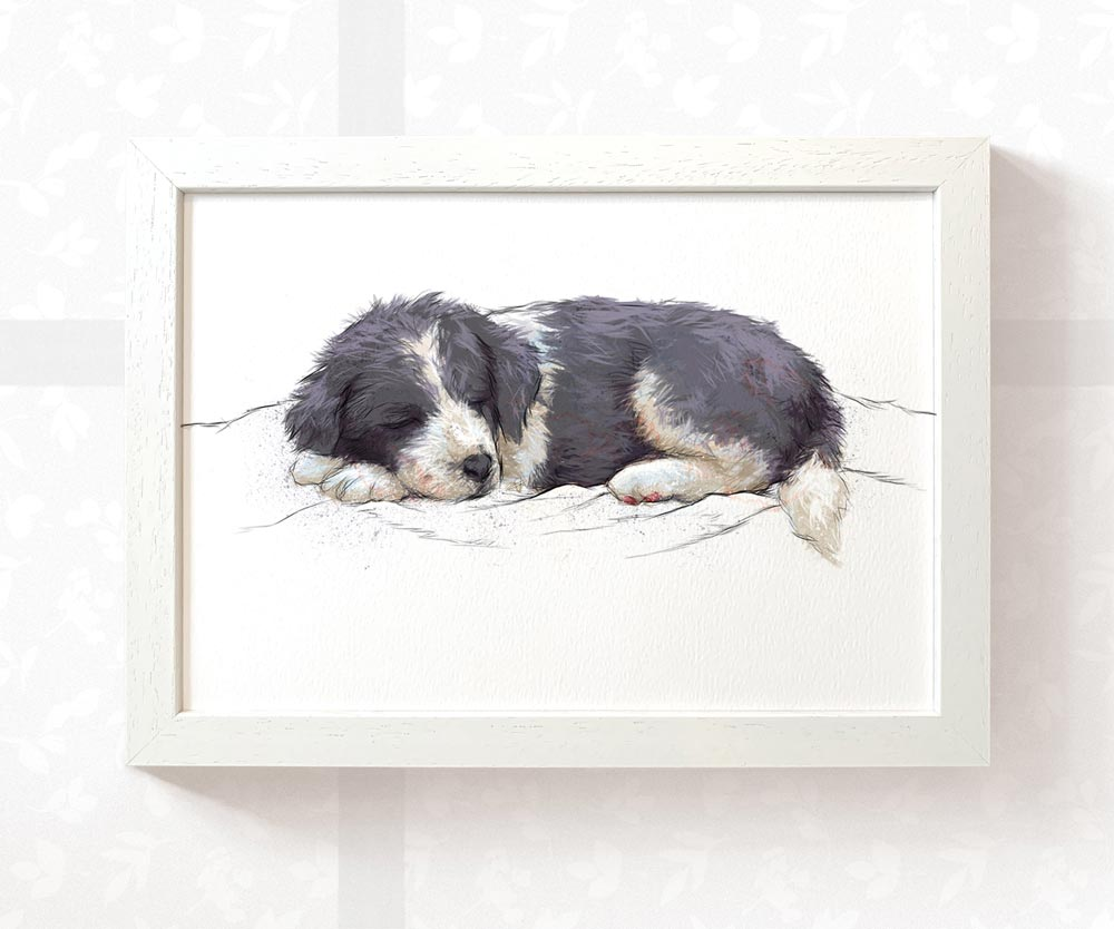 Sleeping Border Collie Puppy Art Print