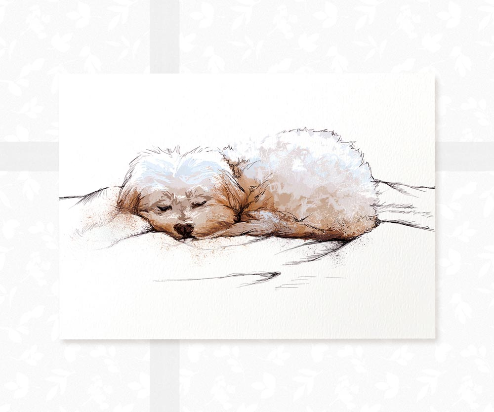 Sleeping Maltese Dog Art Print