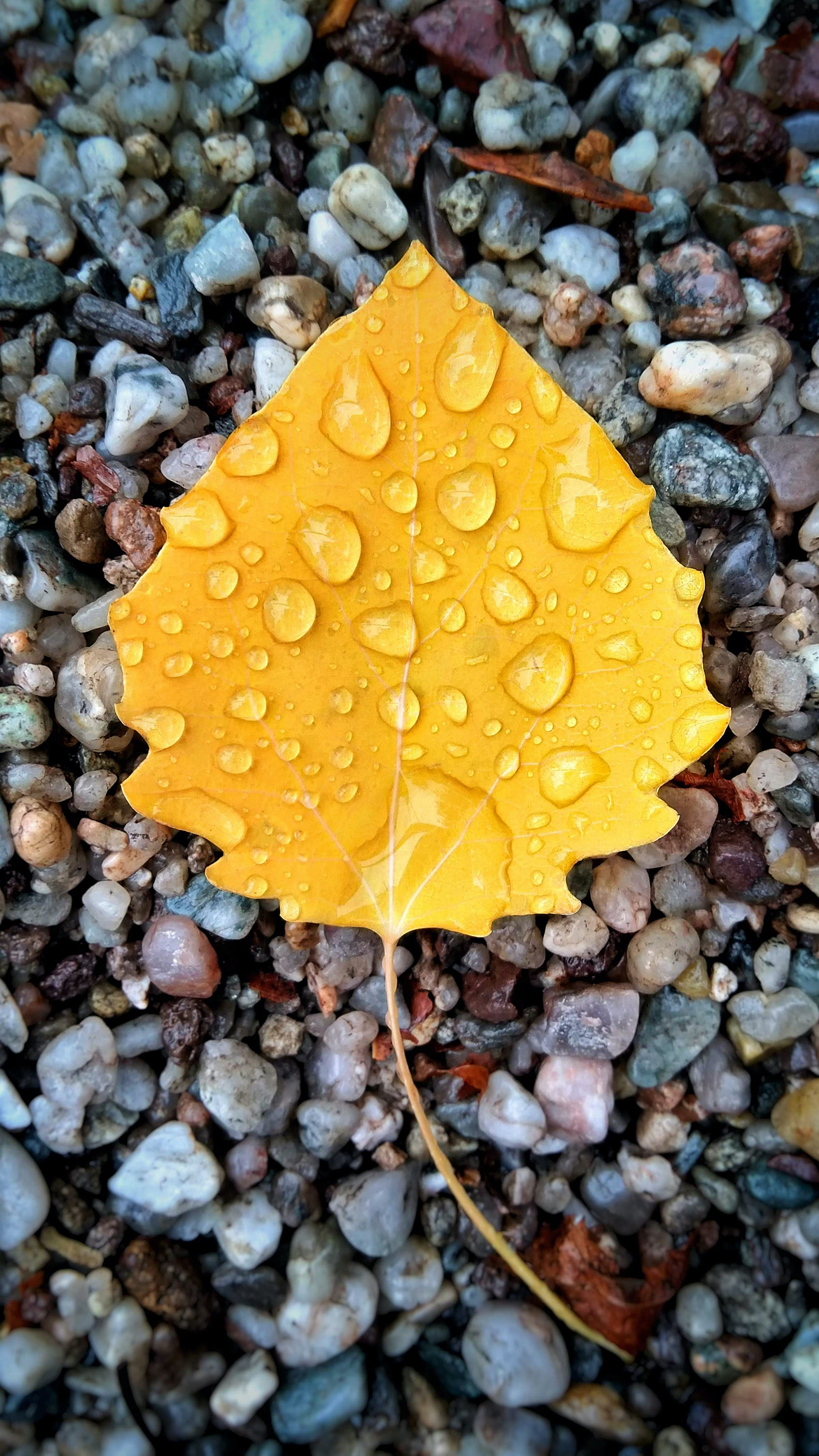 Yellow leaf on gray pebble background