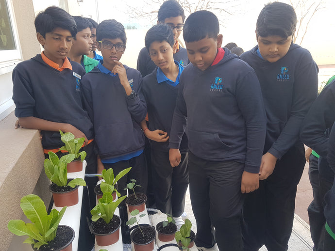 AMLED School Dubai going GREEN with GreenOponics Hydroponic Systems