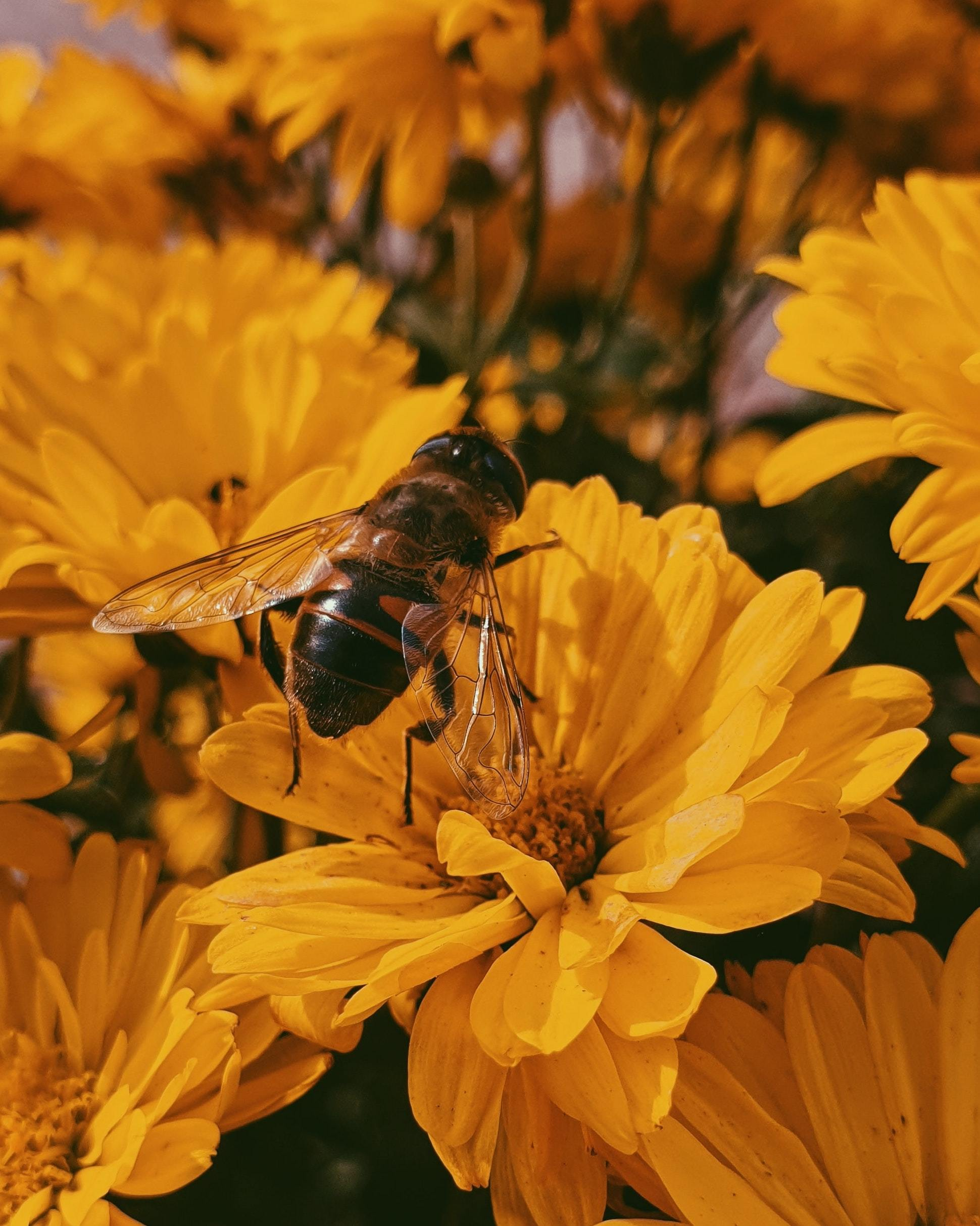 Can Beekeeping be Sustainable?