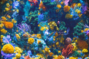 How is SunButter Safe for Reefs?