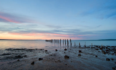 Why we need to save Westernport Bay from AGL. An image of a sunset containing pink and blue in the background, and in the foreground a beach with wooden posts suggesting an old pier leading out to sea