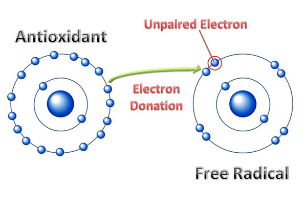 The lowdown on free radicals, antioxidants and your skin. A diagram showing how antioxidants donate electrons to free radicals