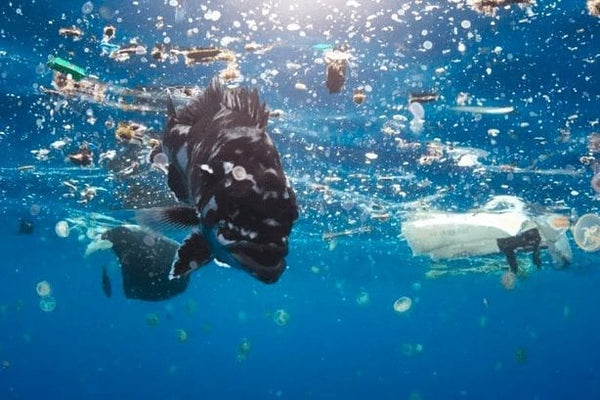 Microfiber pollution - a fish swims through plastic-polluted water