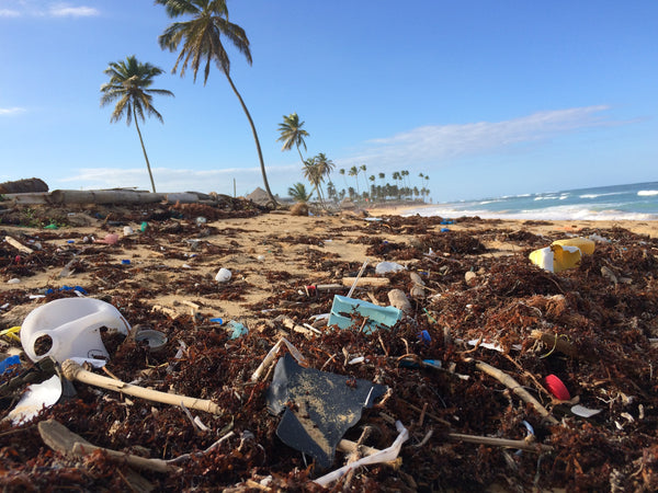 Our journey to creating a plastic-free life - a beach strewn with rubbish and seaweed. There are palm trees in the background