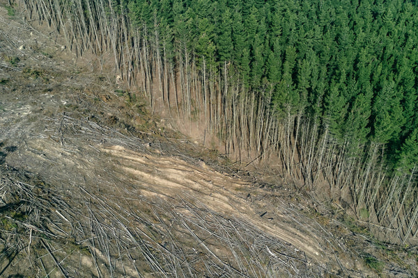 How can I reduce my emissions? A forest that's half been cut down