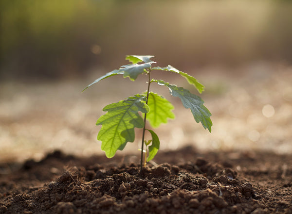 How can I reduce my emissions? A young plant sprouting from the dirt