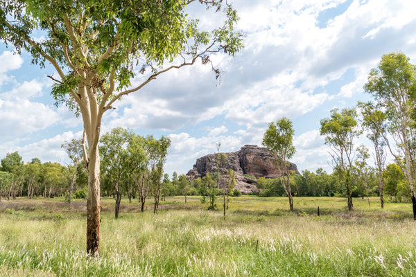 Our favourite places to wear SunButter sunscreen. Eucalyptus trees, green grass and large boulders in the background at Kakadu National Park.