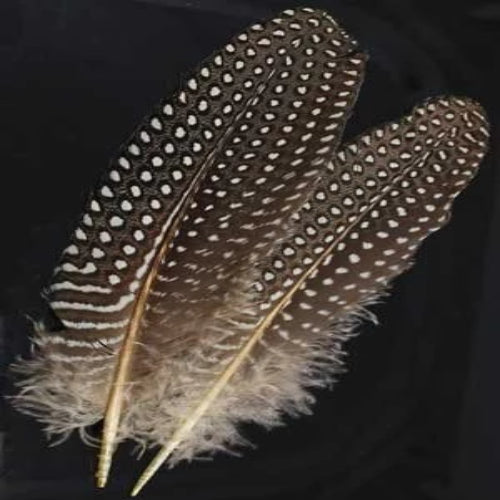 Guinea Hen Wing feather *