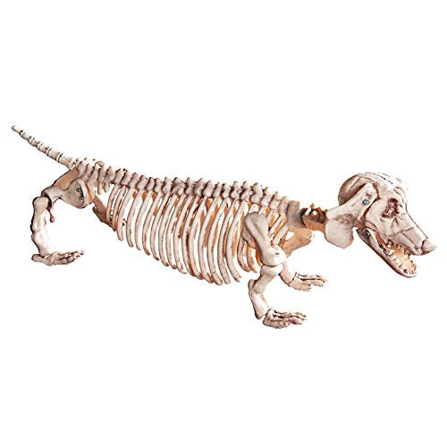 Dachshund Skeleton Halloween Decoration