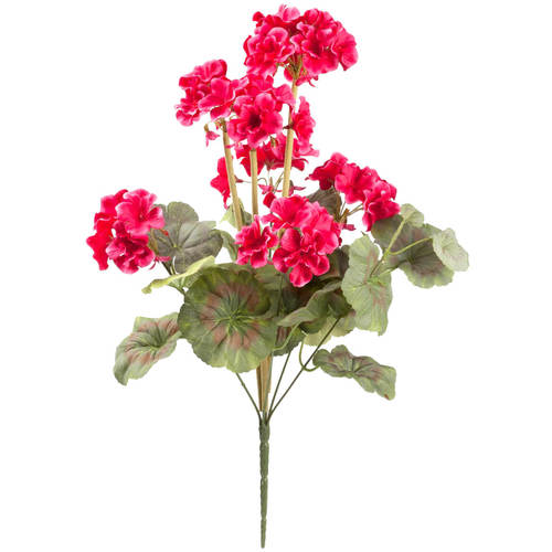 Geranium Bush by OakRidge™-Raspberry